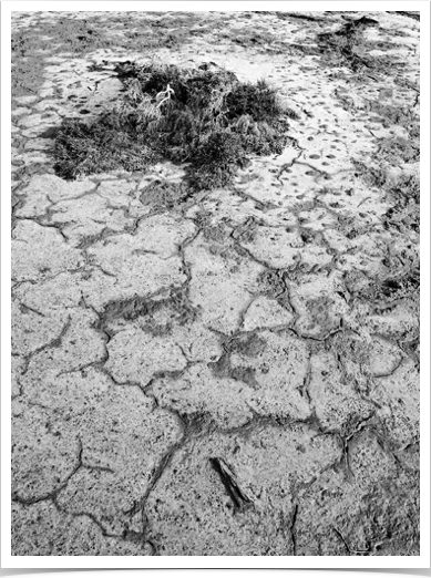 Mud Patterns DVNP (Z3650).jpg