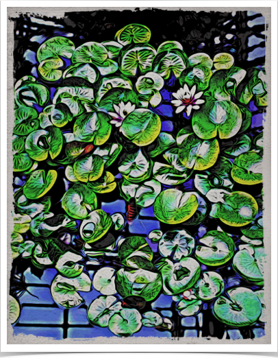 Lily Pads Abstract (Z0399)